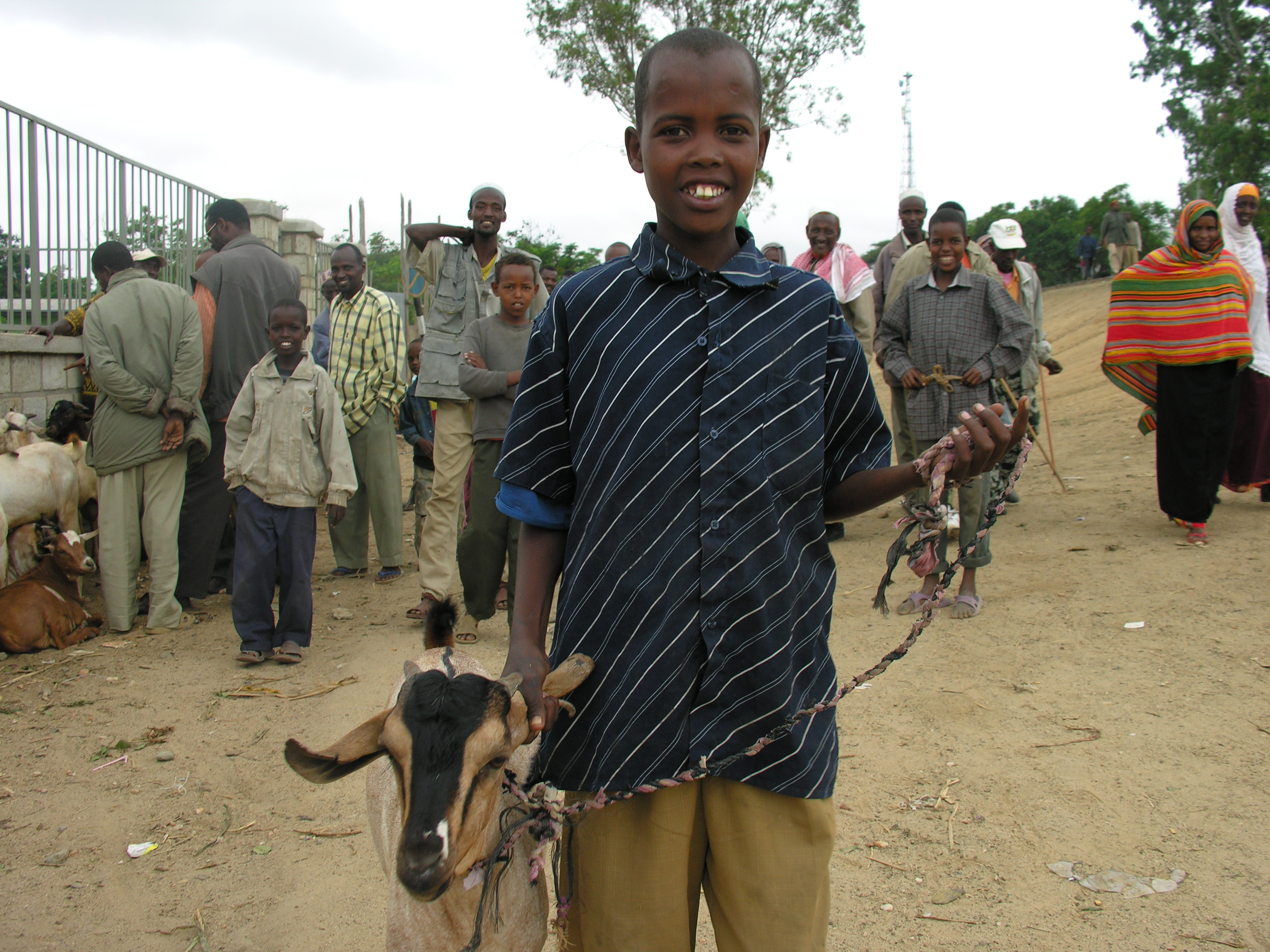 At the goat market in Moyale, Ethiopia, this goat herder gets ready to part with a prized posession. Photo by Sarah Livingston